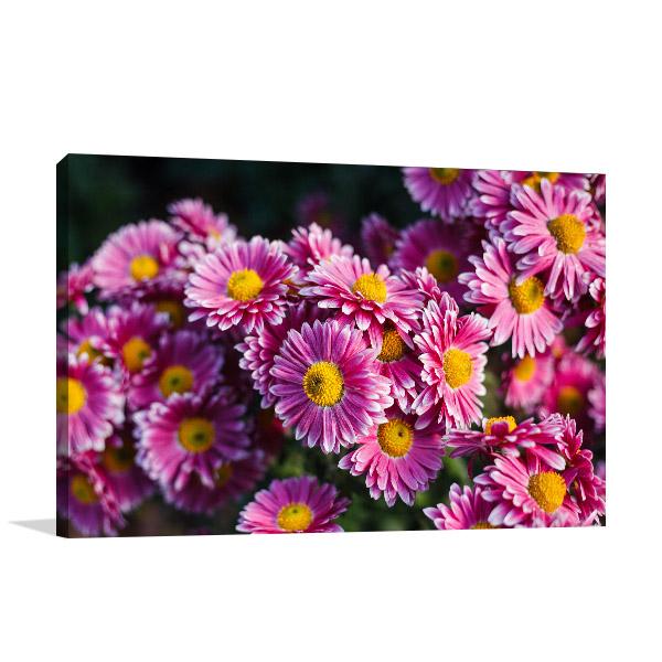 Chrysanthemum Art Photo Design