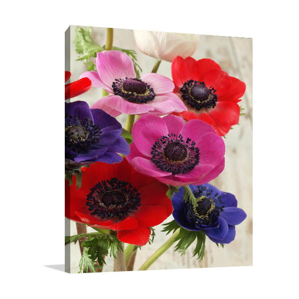 Colourful Anemone Flowers Print Picture