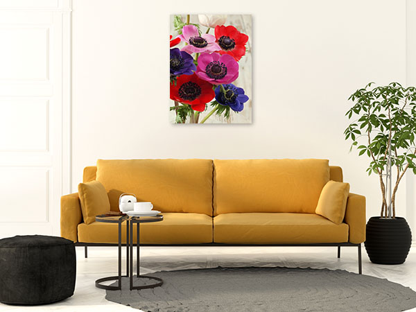 Colourful Anemone Flowers Canvas Art