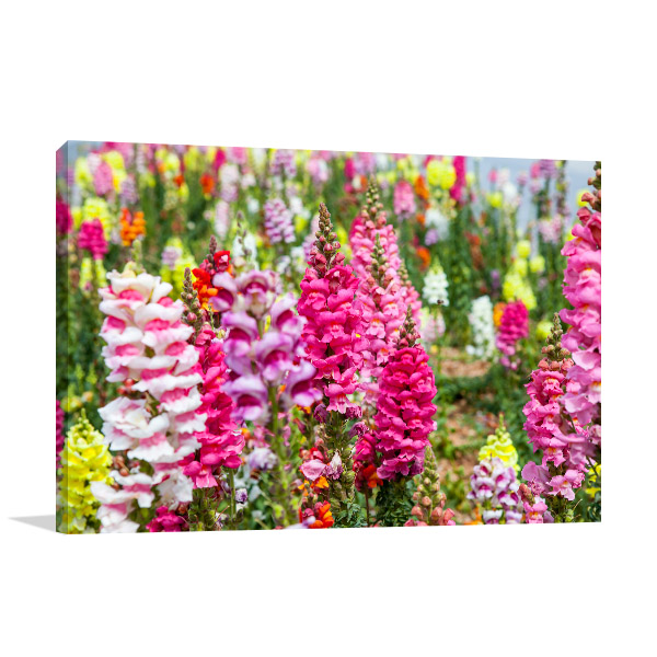 Colourful Snapdragons Artwork Wall