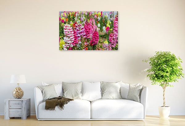 Colourful Snapdragons Canvas Photo Print