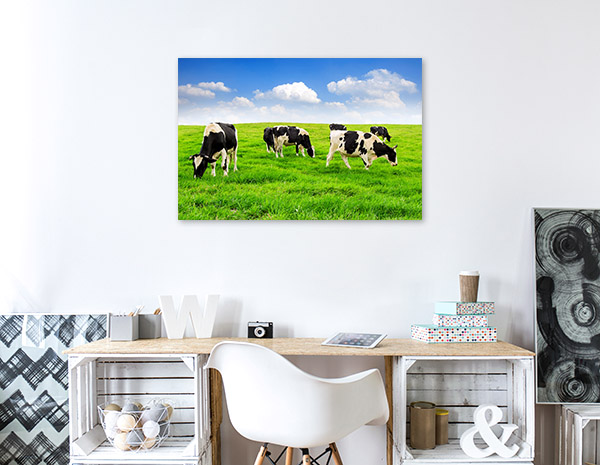Cows in the Field Picture Wall