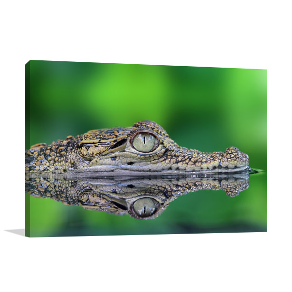 Crocodile Eye Wall Artwork