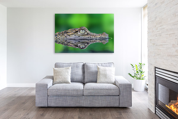 Crocodile Eye Art Picture