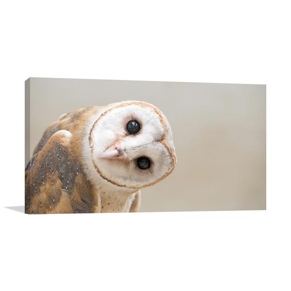Curious Owl Artwork Print