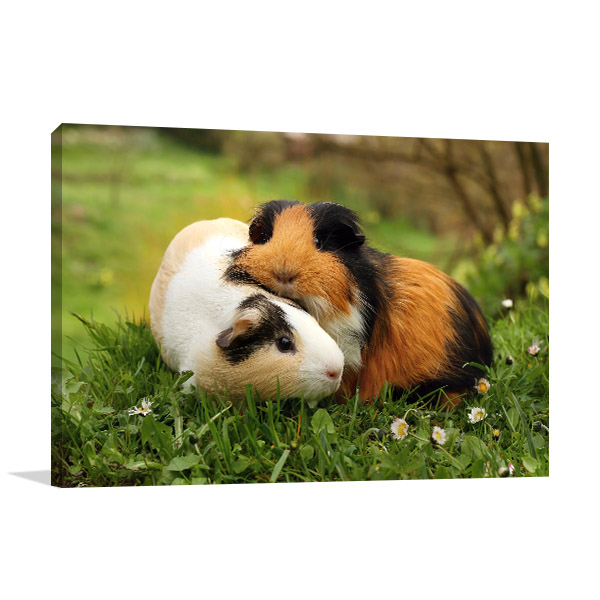 Cute Guinea Pigs Canvas Photo Print