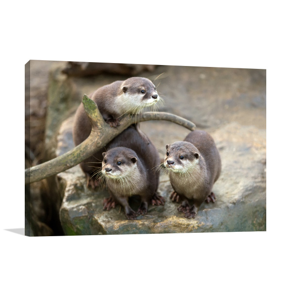 Cute Otters Canvas Prints