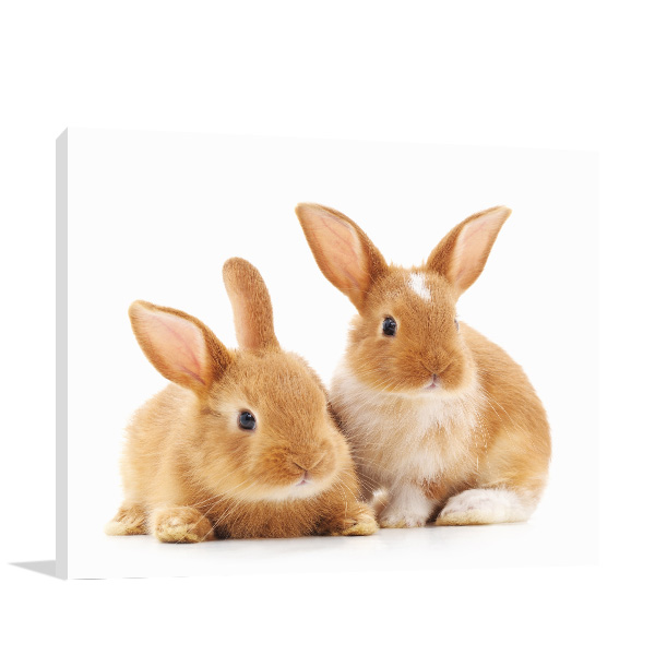 Cute Rabbits Picture Artwork