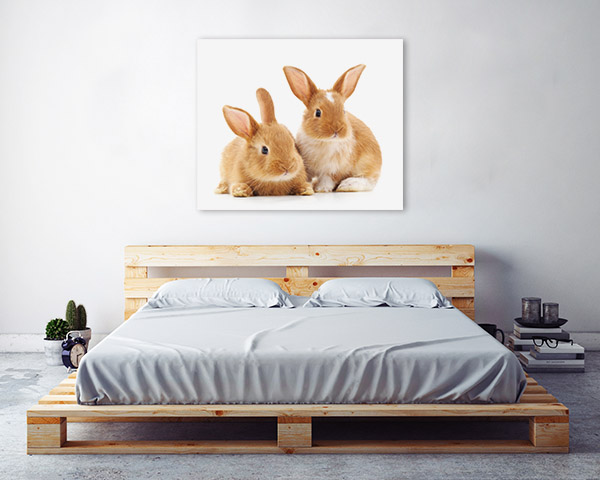 Cute Rabbits Photo Artwork