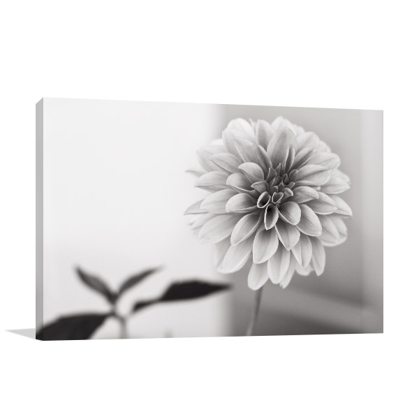 Dahlia in Black and White Wall Artwork