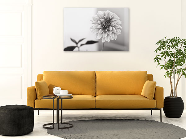 Dahlia in Black and White Prints Canvas