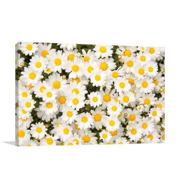 Daisies Photo Artwork Design