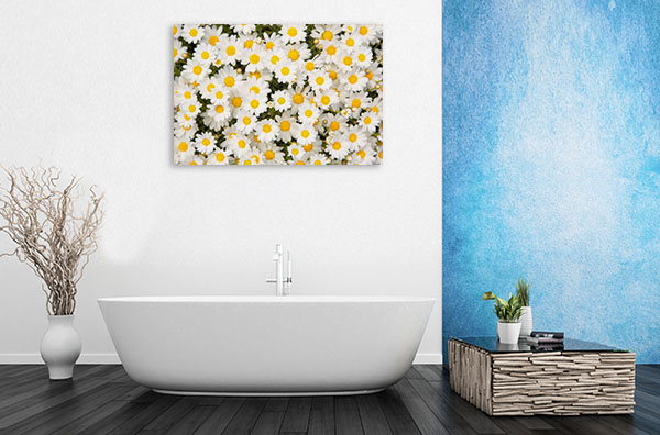 Daisies Artwork Photo Decor