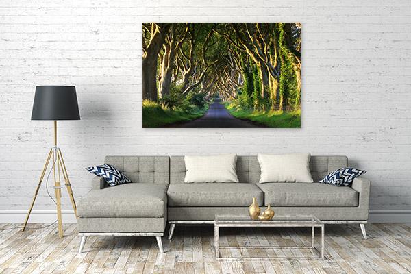 Dark Hedges Canvas Art