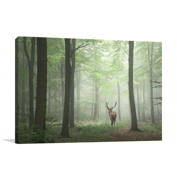 Deer in Forest Canvas Artwork