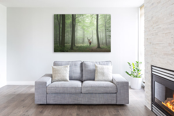 Deer in Forest Picture Wall