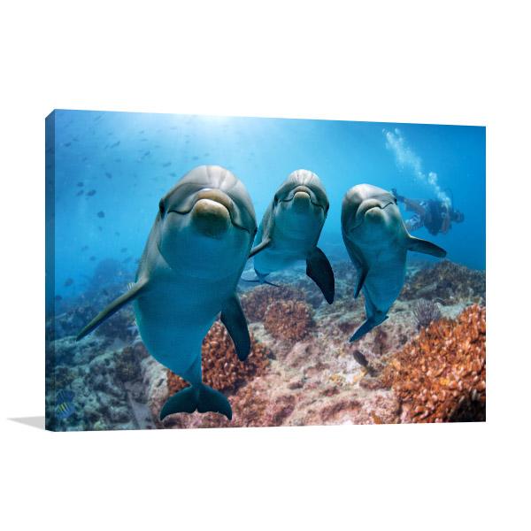 Dolphins Looking at Camera Wall Art Photo Print