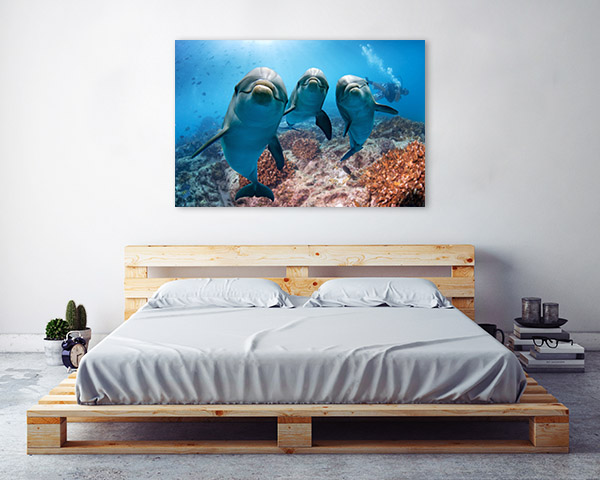Dolphins Looking at Camera Canvas Art Prints
