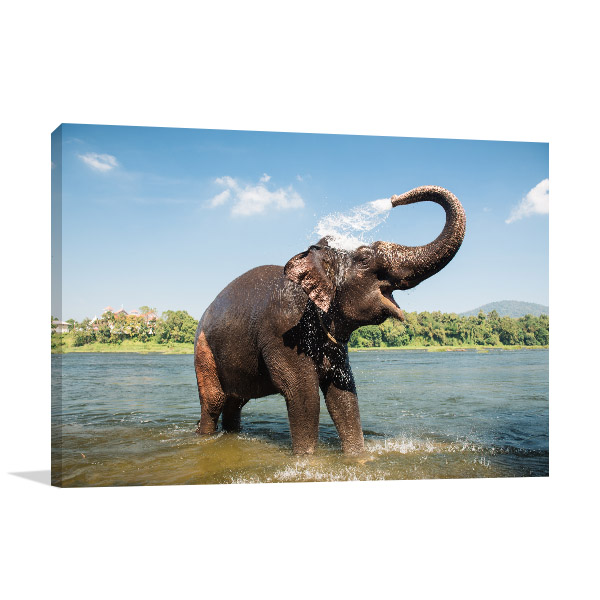 Elephant Bathing Photo Wall