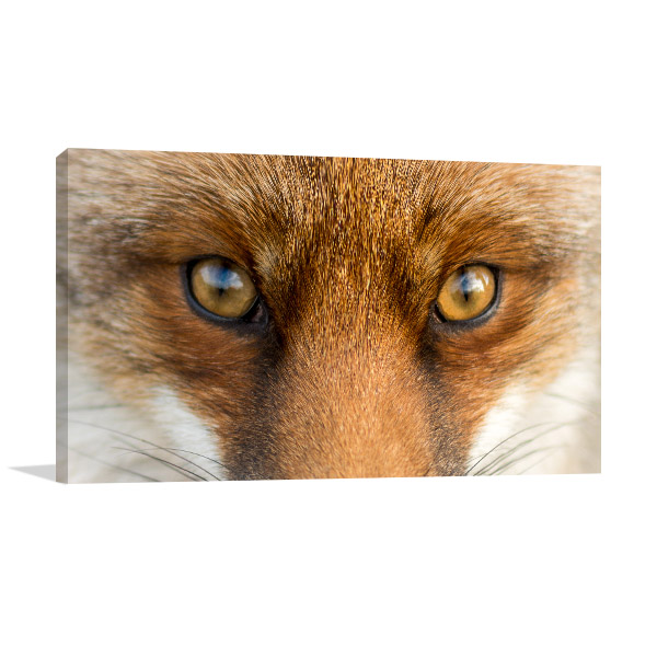 Fox Eyes Wall Art