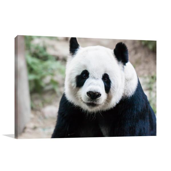 Giant Panda Artwork Picture