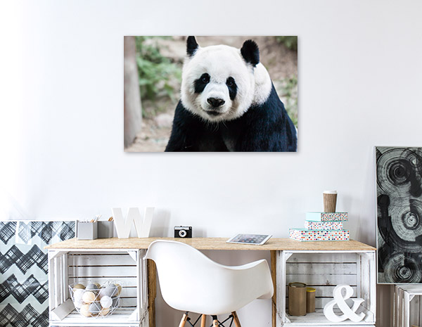 Giant Panda Picture Artwork