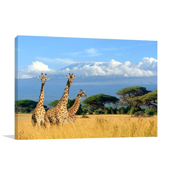 Giraffes in Savannah Art Photo