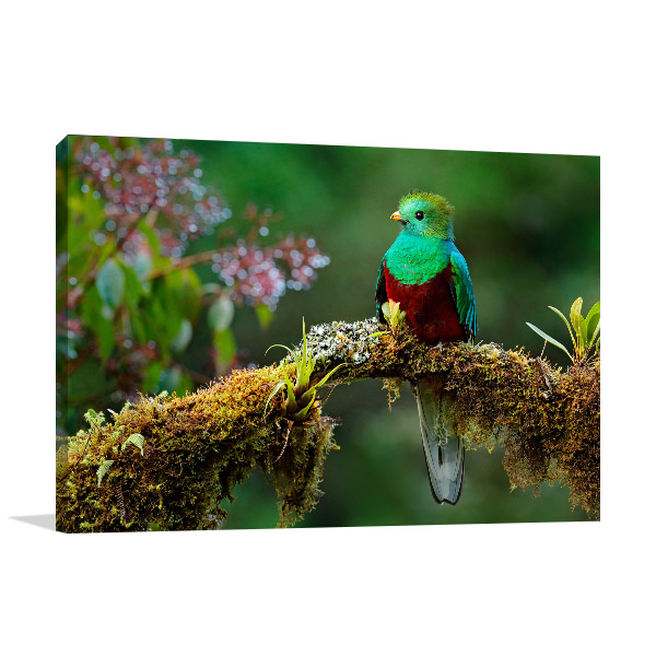 Green and Red Bird Picture Print