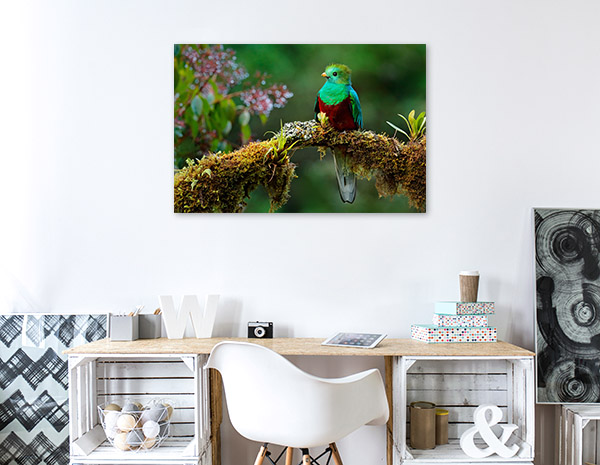 Green and Red Bird Wall Picture