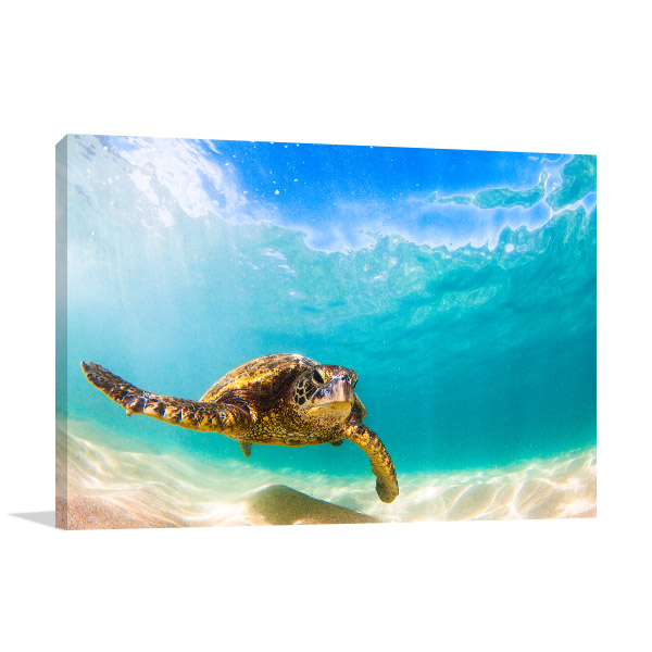 Green Sea Turtle Artwork Print