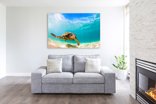 Green Sea Turtle Photo Artwork