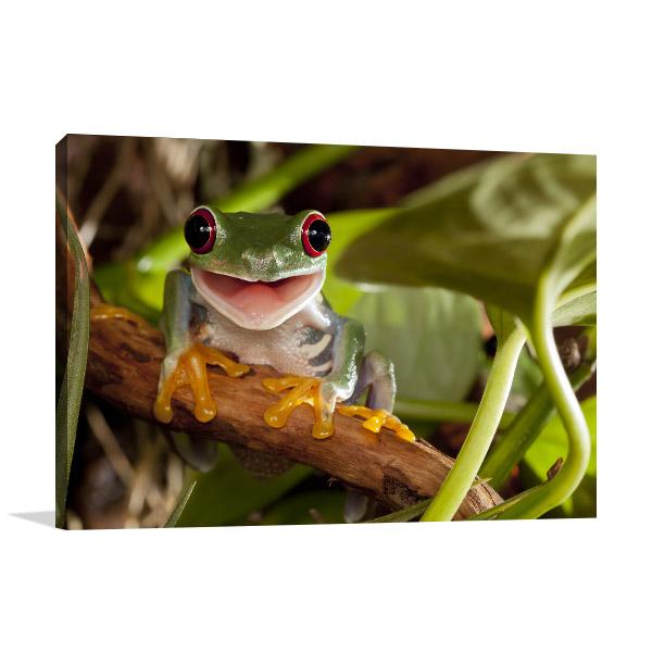 Happy Tree Frog Canvas Wall Art