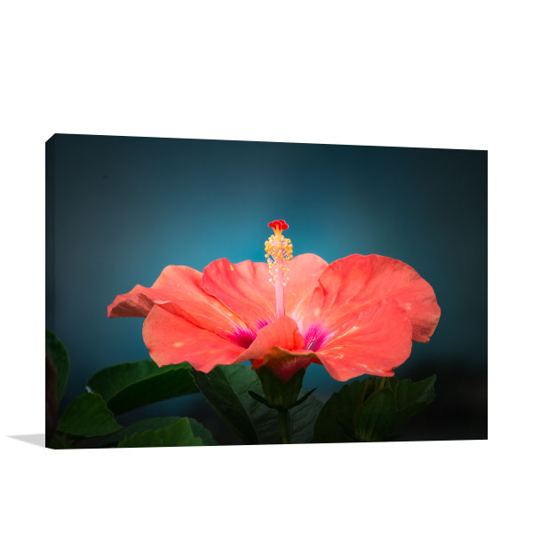 Hibiscus Photo Wall Arts