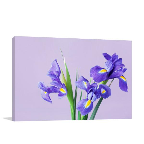 Iris on Vase Print Art Canvas