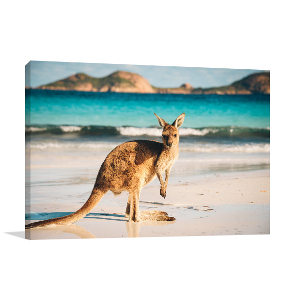 Kangaroo in Beach Artwork Canvas