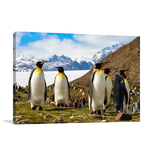 King Penguins in Antarctica Print Picture