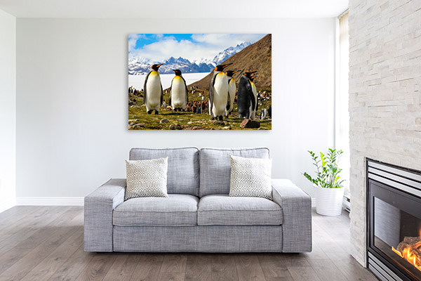 King Penguins in Antarctica Wall Canvas