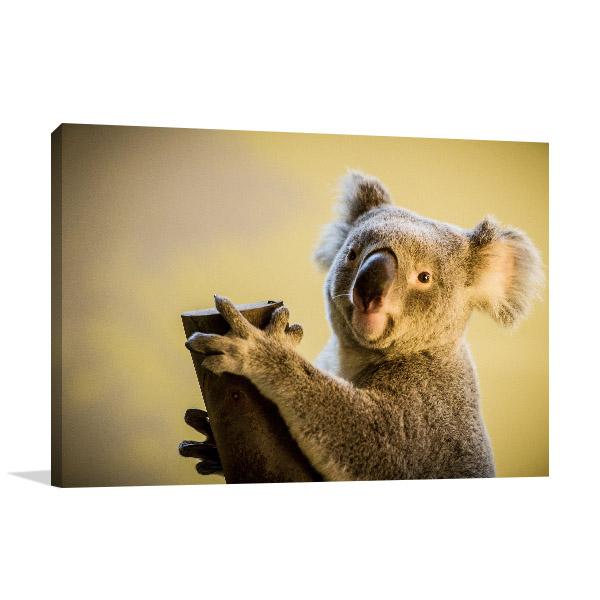 Koala Bear Canvas Photo Print