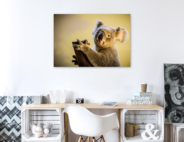 Koala Bear Print Photo Art