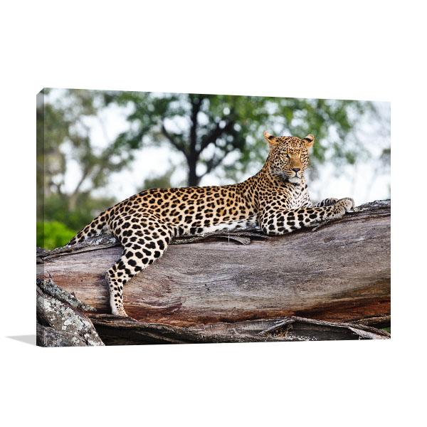 Leopard in Tree Photo Wall