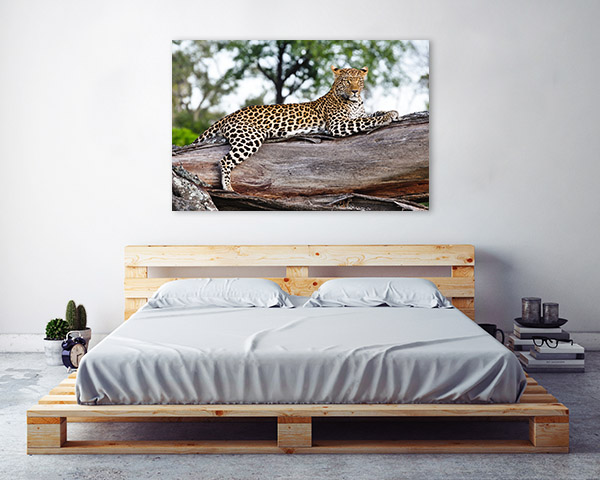 Leopard in Tree Wall Art Print