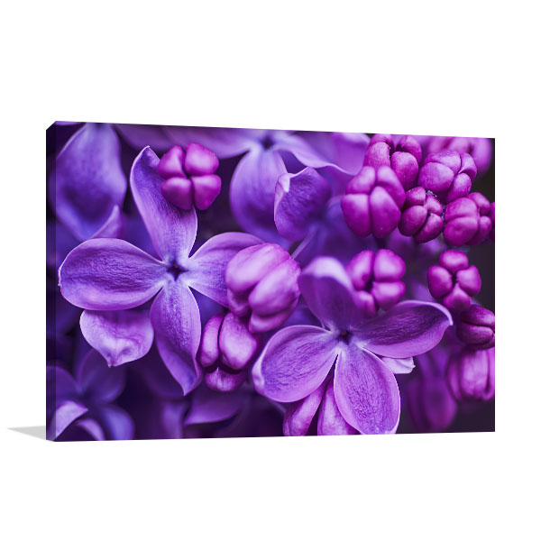 Lilac Closeup Artwork Print