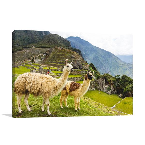 Llamas in Machu Picchu Wall Artwork