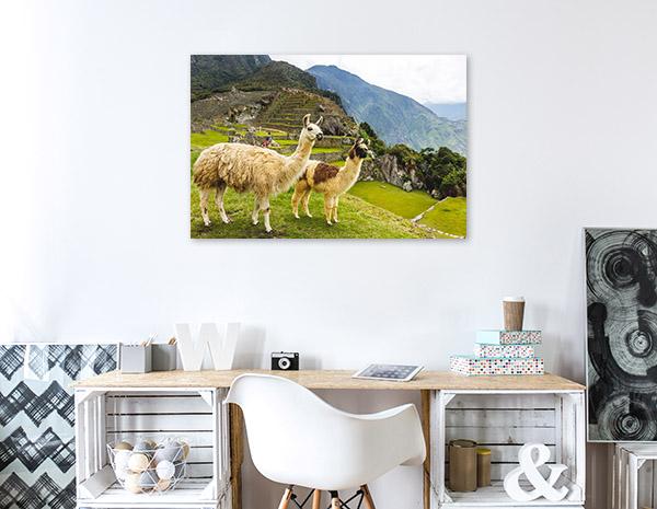 Llamas in Machu Picchu Art Photo