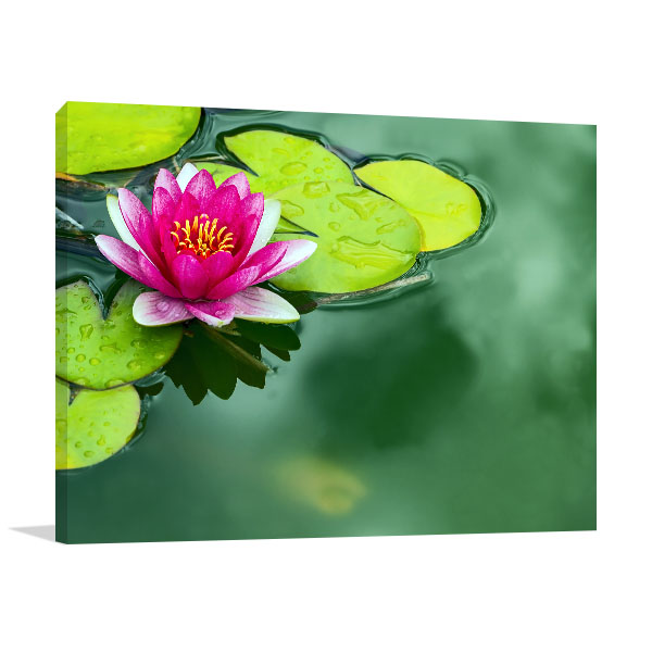 Lotus Pond Canvas Art Prints