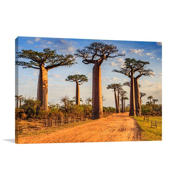 Madagascar Art Print Baobab Avenue Artwork Picture