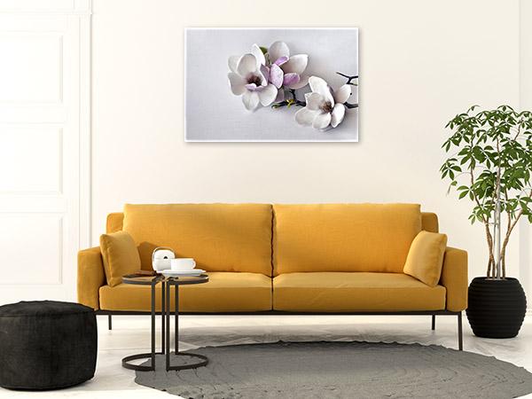 Magnolias on White Background Photo Canvas