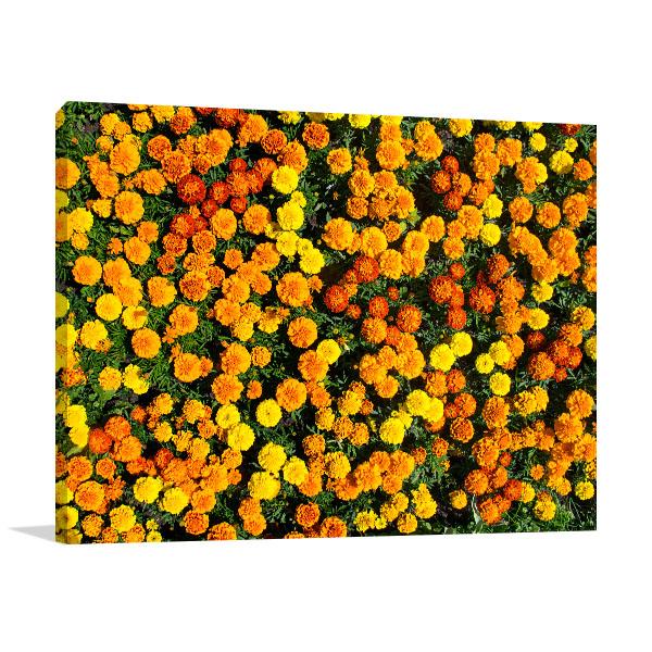 Marigold Wall Art Print