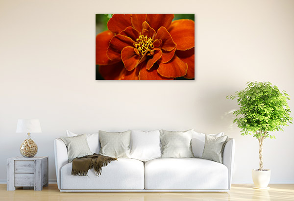 Marigold Closeup Canvas Prints