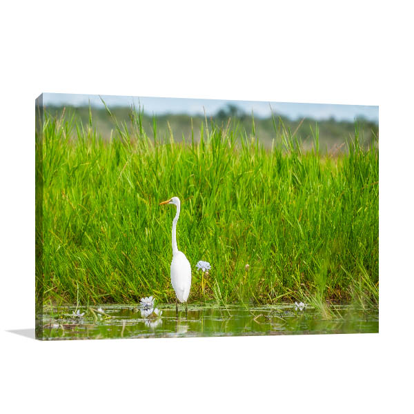 Mary River Art Print Great Egret Canvas Art Prints